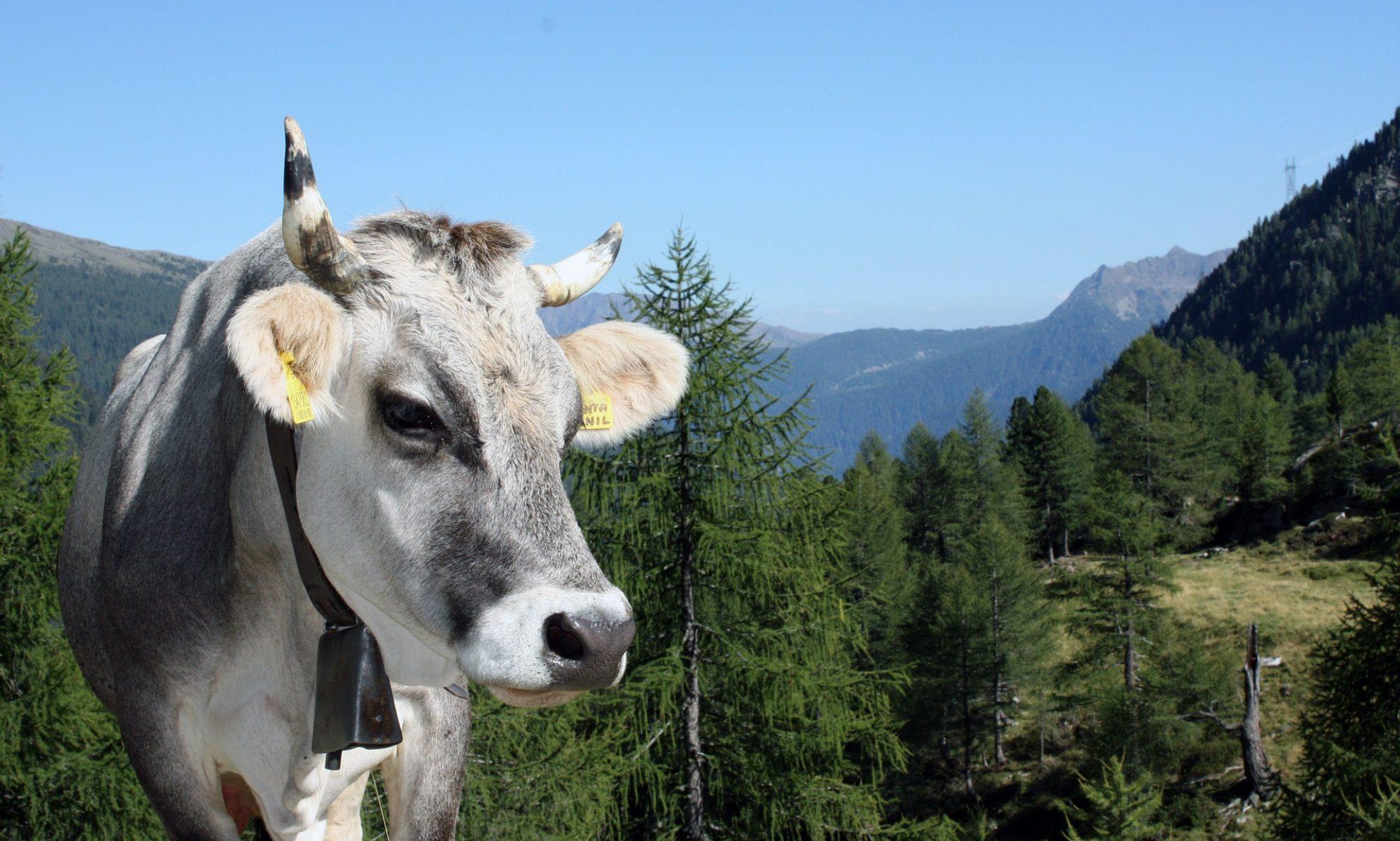 Tirol.Media